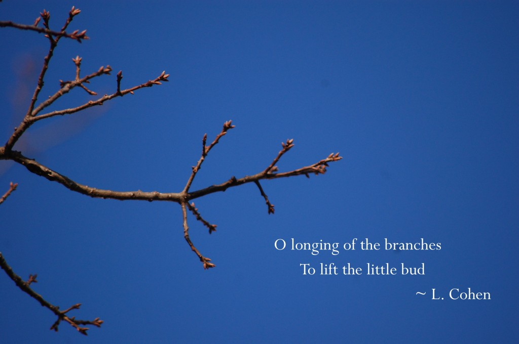 Longing of the Branches