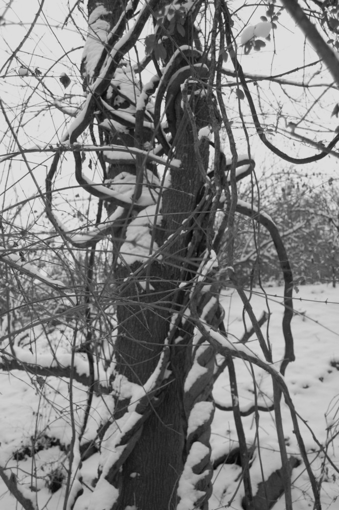 twisted vines & branches